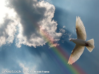 A dove soaring above a beautiful sky.